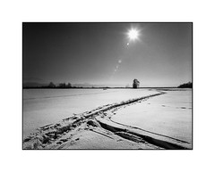 Der Sonne entgegen (cardijo) Tags: österreich austria salzburg landscape landschaft winter snow schnee sun sonne analog film kodak trix rodinal bronica zenzanon blackandwhite bw schwarzweis sw nikon coolscan