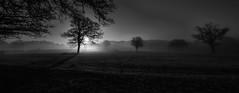 Panorama in black and white (PeterSundberg66 former PeterSundberg65) Tags: nature panorama trees forrest grass misty sunrise blackandwhite monochrome outdoor ngc daarkland daarklands