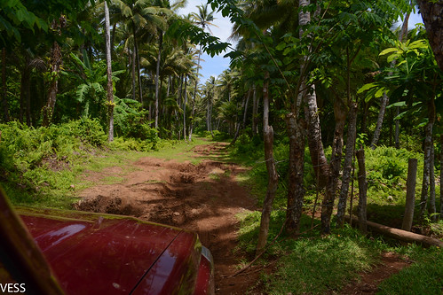 road through coconut plantation