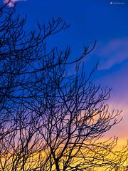 Gradientes (A M G) Tags: contraluces naturalezaviva alpujarras arboles puestasdesol viajes flora españa portecnica