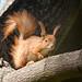 Sunny squirrel