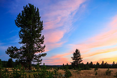 2E9A1843 (lee scott ) Tags: pink trees sunset sky usa tree nature outdoors yellowstone wyoming nationalparks leescott usnationalpark rightsmanaged rightmanaged leescottphotography lightsourcephotographybyleescott canyonjunctionareaofyellowstonenationalpark