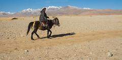 near Mt. Everest area (Lie's Foto Studio 2.0) Tags: china horses mountains landscape asia tibet himalaya himalayas tibetanplateau tibetautonomousregion