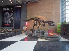 T-Rex (viktrav) Tags: stpaul trex tyrannosaurusrex sciencemuseumofminnesota