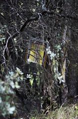 Arte inexplicable (mls2012) Tags: espaa naturaleza nature canon arbol spain silla bosque momento otoo colgada ramas 60d