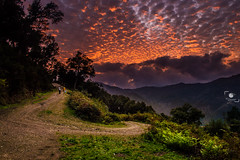Sunset (OuSsama JB) Tags: sunset sky tree forest algeria jijel