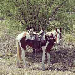 Rancher's horse. #TheWorldWalk #mexico #travel #twwphotos
