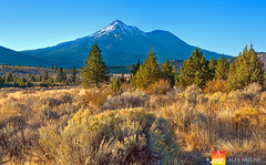 Mount-Shasta (Nualchemist) Tags: california trees light sky sun snow green nature colors yellow landscape volcano golden morninglight quiet bright outdoor north peaceful sunny bluesky autumncolors clear evergreen vegetation mountshasta majestic refreshing sanctuary clearsky tranquillity snowcap evergreentrees autumnlight goldencolor