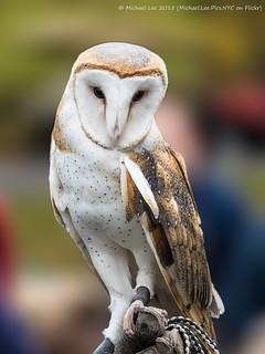 Barn Owl (PB071778-Edit)