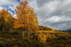 Aspens In The Fall (Robin-Wilson-Off) Tags: autumn fall colors clouds bravo colorado aspentrees castlecreek nikond800 nikon1635mmf4