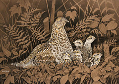 "Artwork ""Mom Knows Best"" 2015 (Wild Chroma) Tags: gouache painting drawing ink wildlife art wildlifeart birds bird ruffed grouse ruffedgrouse hen illustration bonasa umbellus bonasaumbellus"