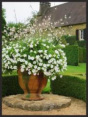 bouquet (Doonia31) Tags: fleurs jardin vert vase maison blanc jarre