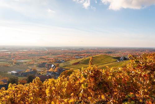 Vue sur la plaine Rhénane depuis Tiergarten