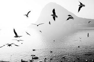 The Birds // Hitchcock