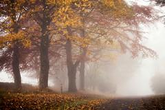 Gone… (Stuart Stevenson) Tags: uk photography scotland clydevalley stuartstevenson