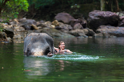 Visit the Elephant Valley Project in Cambodia for a chance to swim with elephants