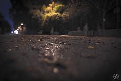 Paestum Deserta (tesaurofrancesco) Tags: foglie 35mm nikon paestum autunno freddo notte solitudine passeggiata d610