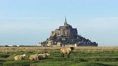Moutons prs sals (Mr EtOH) Tags: france macro landscape sony paysage tamron 90mm mont mouton saintmichel prssals