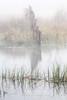 Ard Fence (Shuggie!!) Tags: fences grasses hdr highkey landscape lochard mistandfog morninglight scotland trossachs zenfolio karl williams karlwilliams