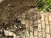 shadows (Cybergabi) Tags: curacao caribbean palmtrees pavement stillife shadows