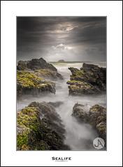 Sealife (John_Armytage) Tags: oxleybeach portmacquarie nsw australia seascape johnarmytage sony sonyaustralia rocks clouds moss sonya7r2 sony1635