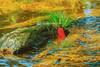_J5K1693.1111.Fansipan.Sapa.Lào Cai (hoanglongphoto) Tags: asia asian vietnam northvietnam northwestvietnam nature river water rock sunlight sunny watersurface canon canoneos1dsmarkiii hoanglienmountain tâybắc làocai sapa hoàngliênsơn thiênnhiên thiênnhiênsapa fansipan sapanature suối nắng nước mặtnước tảngđá canonef70200mmf28lisiiusmlens