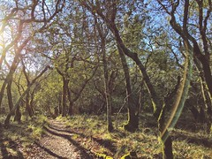 Letting in the Light (harminder dhesi photography) Tags: vscocam vsco snapseed enjoyingtheview winecountry norcal northbay bayarea california sonoma santarosa sonomacounty light flare sun trees path trail nature view winter hiking landscape