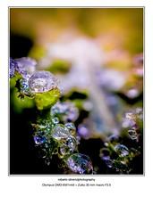 P874321 (Roberto Silverio) Tags: omdrevolution olympusinspired olympuscamera zuikolens zuikodigital open colors olympusphotography drops water ice waterdrops light