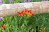 lake katherine. july 2016 (timp37) Tags: summer 2016 illinois lake katherine flowers flower july palos heights