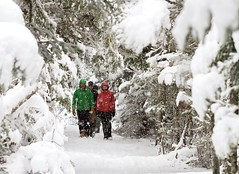 Walking in the Snow (Karen_Chappell) Tags: snow snowing snowy winter cold white people nature nfld canada atlanticcanada stjohns pippypark newfoundland avalonpeninsula green red path trail trees tree evergreen scenery scenic january