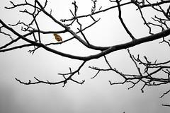 Passero (MILESI FEDERICO) Tags: milesi milesifederico bird uccello volatile wild wildlife winter inverno febbraio 2017 nikon nikond7100 nital nature natura nat sigma sigma150500 d7100