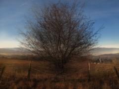 "the magic tree - welcome 2017 (alex ""portfolio"") Tags: cunewalde oberlausitz bieleboh czorneboh sachsen mehrfachbelichtung multiple exposures exposure multipleexposure"