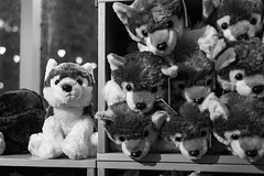skeptical (chris.duesing) Tags: stuffed animal dire wolf tar pits toy gift shop bnw