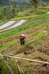 IMG_4384 (FelipeDiazCelery) Tags: indonesia bali asia arroz rice ricefields composdearroz agricultura griculture wrok worker trabajdor granjero granja farm farmer