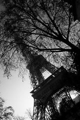 Eiffel Tower, Paris (tim jg photography) Tags: tower eiffel eiffeltower paris france capital capitalcity black white blackandwhite tree trees shrubbery shade shadows texture pattern design shape form metal show sky