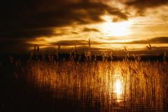 sunset over the Scottish lake (Morag.) Tags: sunset gold golden peaceful calm grass lake lakeofmenteith hotel sky clouds sun reflection moody atmosphere winter scotland nikon d3300 nikkor digital landscape landschaft scenic nature glow