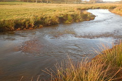 Trouts nest (In Explore) (Steenjep) Tags: vinter winter haderup haderiså å stream sun sol refleks reflex