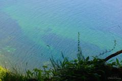 Baltic Sea (Felicia Brenning) Tags: jasmund national park rügen germany nature baltic sea summer sun light colors sony