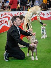 Exposición canina (carlosgomezprieto) Tags: perro exposicion canina exposicioncanina vigo mascotas ifevi perros agility