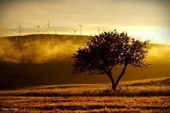 Light in the fog (Sara Zicola) Tags: fog nature light tree windturbines sun wheat irpinia bisaccia sara zicola sarazicolaphotography landscape landscapeslover fujifilm fujihs50 natura nebbia soft lovephotography sunset differentsunset