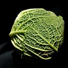 Chou au soleil (JMVerco) Tags: square légume flickrchallengegroup vert