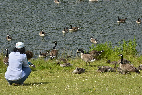 En admiration devant les canards