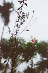 IMG_6243 (athingcalledlife) Tags: blackandwhite india green art nature rain photography colours lush coorg virajpet vsco