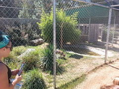 20150919_121831 (mjfmjfmjf) Tags: oregon zoo 2015 greatcatsworldpark