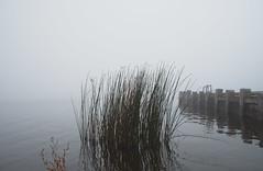 bush on the waaaater (flegontovna) Tags: morning nature fog landscape bush peaceful meditation moment specland