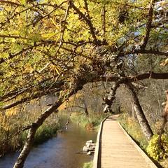 Itasca State Park (def_rabbit) Tags: statepark autumn tree minnesota walkway itasca