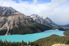Peyto Lake (dbonny) Tags: lake snow canada mountains forest rockies alberta banff rockymountains albertacanada banffnationalpark peytolake canadianrockies bowsummit caldronpeak mountpatterson