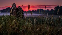 Misty sunrise (Matthias-Hillen) Tags: red sky mist rot misty fog sunrise germany landscape deutschland dawn twilight haze weide nebel saxony foggy meadow wiese himmel pasture matthias lower moor sonnenaufgang daybreak hillen dunst niedersachen morgendämmerung matthiashillen