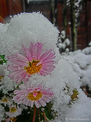 (Shiori Hosomi) Tags: japan tokyo snowy january hdr 2013  23