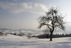 Baum (Christian Güttner) Tags: schnee winter sky mountain snow tree nature landscape landscapes outdoor natur wolken poland polska natura berge polen landschaft niebieski góry baum träd małopolska niebo kleinpolen krajobraz kasina kasinawieka